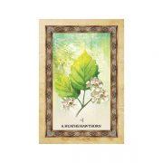 Celtic-Tree-Oracle-4