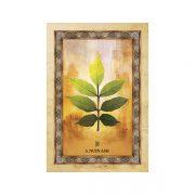 Celtic-Tree-Oracle-6