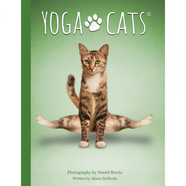 Yoga-Cats-Oracle-2-600×600
