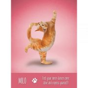 Yoga-Cats-Oracle-4-600×600