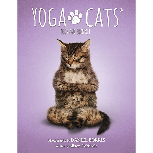 Yoga-Cats-Oracle