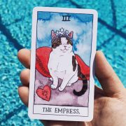 Cat Tarot 8