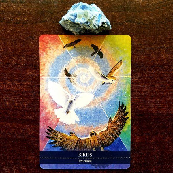 Shamanic-Medicine-Oracle-Cards-9