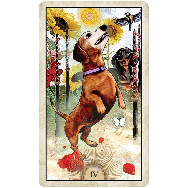Wise-Dog-Tarot-9